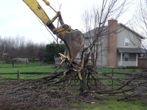 Home Addition - Goodbye G'pa Tree #3
